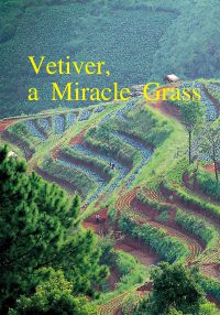 vetiver_grass
